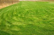 丰宁草坪建植 草坪修剪维护